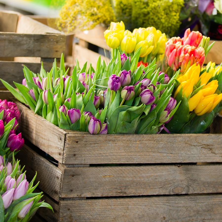 Tulpen Quadrat-7