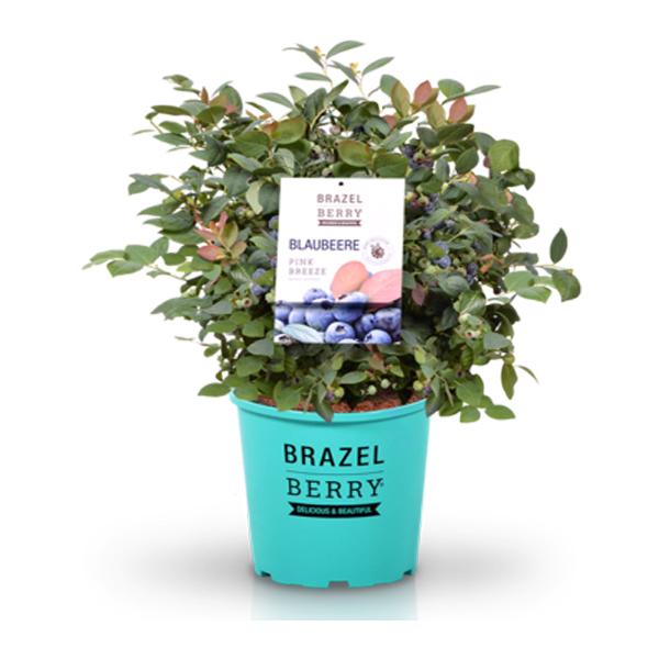 Brazel Berry 5l Topf